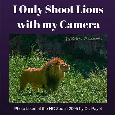 A Lion, a Dentist, and an Internet Lynch Mob